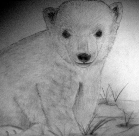 Dibujo de un oso polar a lápiz